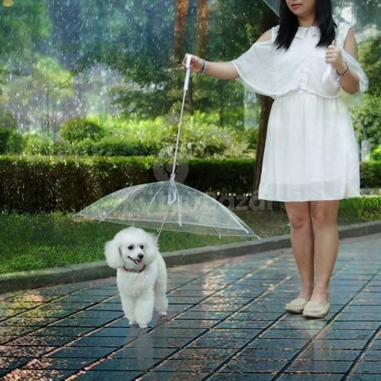 Kutya esernyő pórázzal