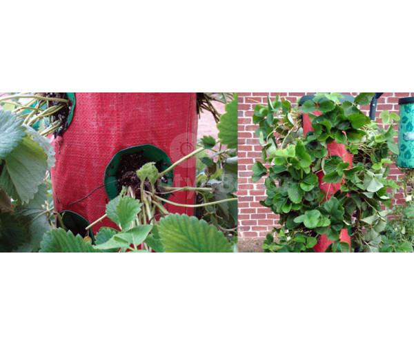 Függő eper kert