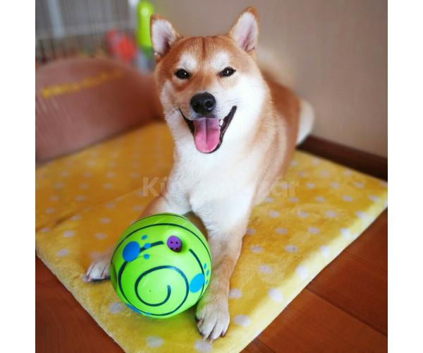 Kutyajáték, kutyalabda