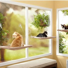 Ablakra tapasztható cica pihenő
