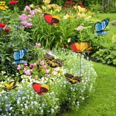 Kerti Pillangó (50db)