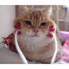 Cica masszőr - macskamasszírozó eszköz