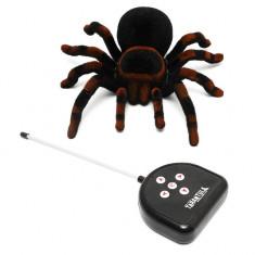 Rémisztő pók távirányítóval