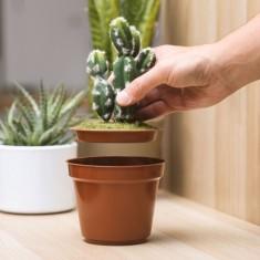 Titkos kaktusz széf