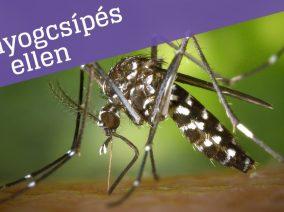 Szabadulj meg a szúnyogcsípésektől! (8 tipp)