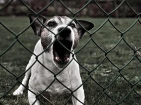 Félsz a kutyáktól? Ezt jó, ha magadnál tartod!
