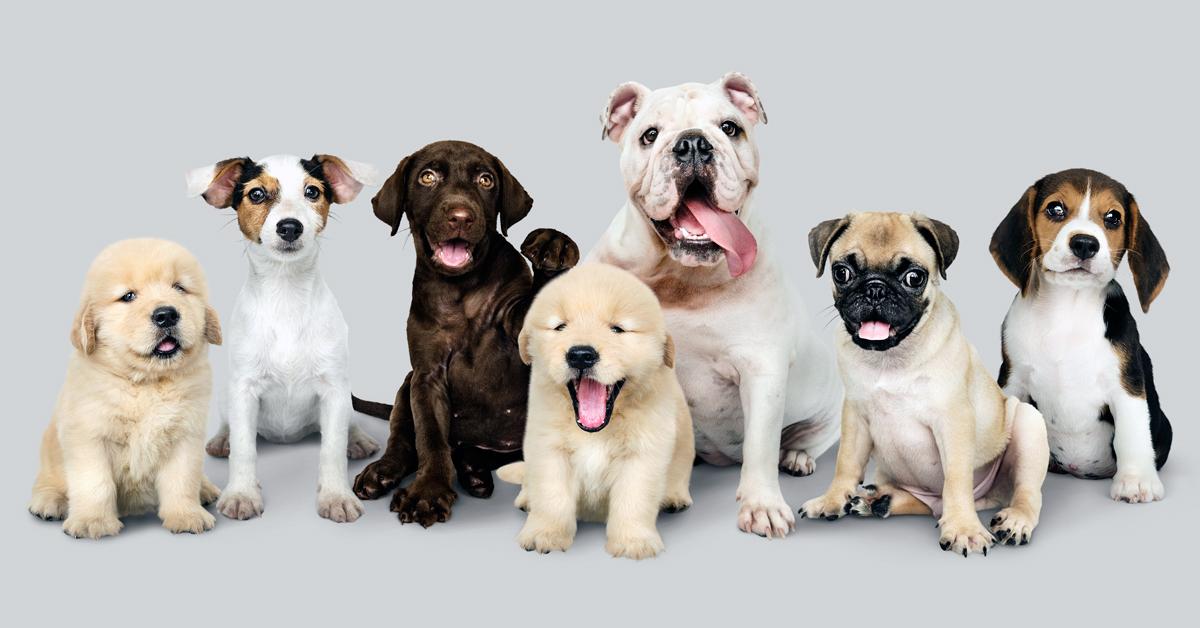 Te mindent megteszel kutyusod biztonsága érdekében?