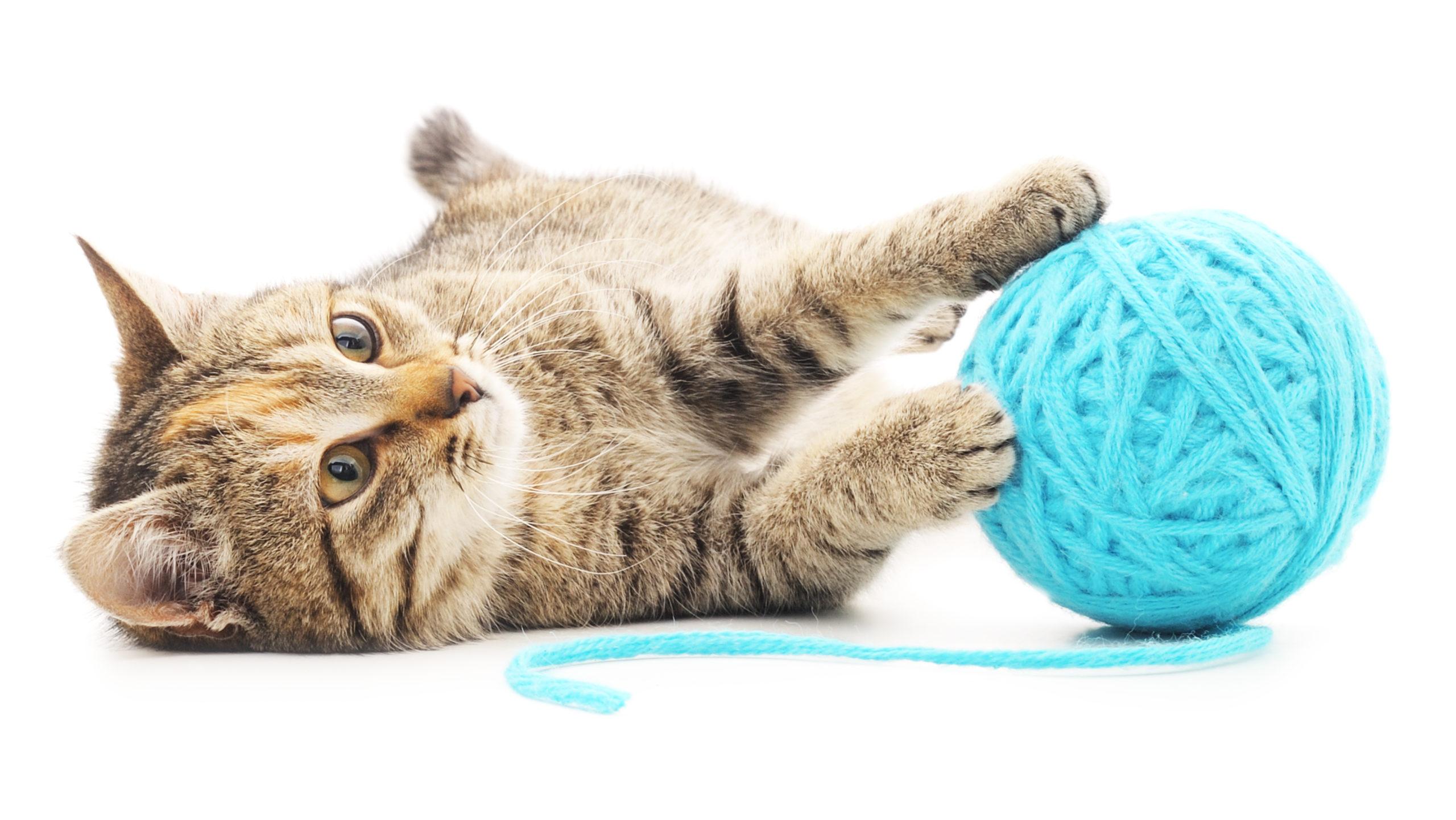 Praktikus eszközök a cicák boldogságáért